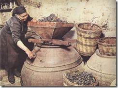 CW - Pithari & Winemaking