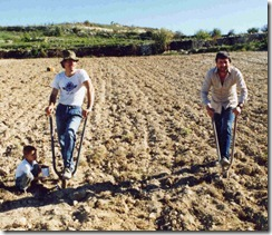 Vine Planting - 1- preparing the hole